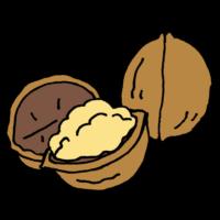 胡桃,山胡桃,呉桃,核桃,くるみ,クルミ,手書き風,食べ物,実,栄養,食材,ポリポリ,ナッツ,殻,固い
