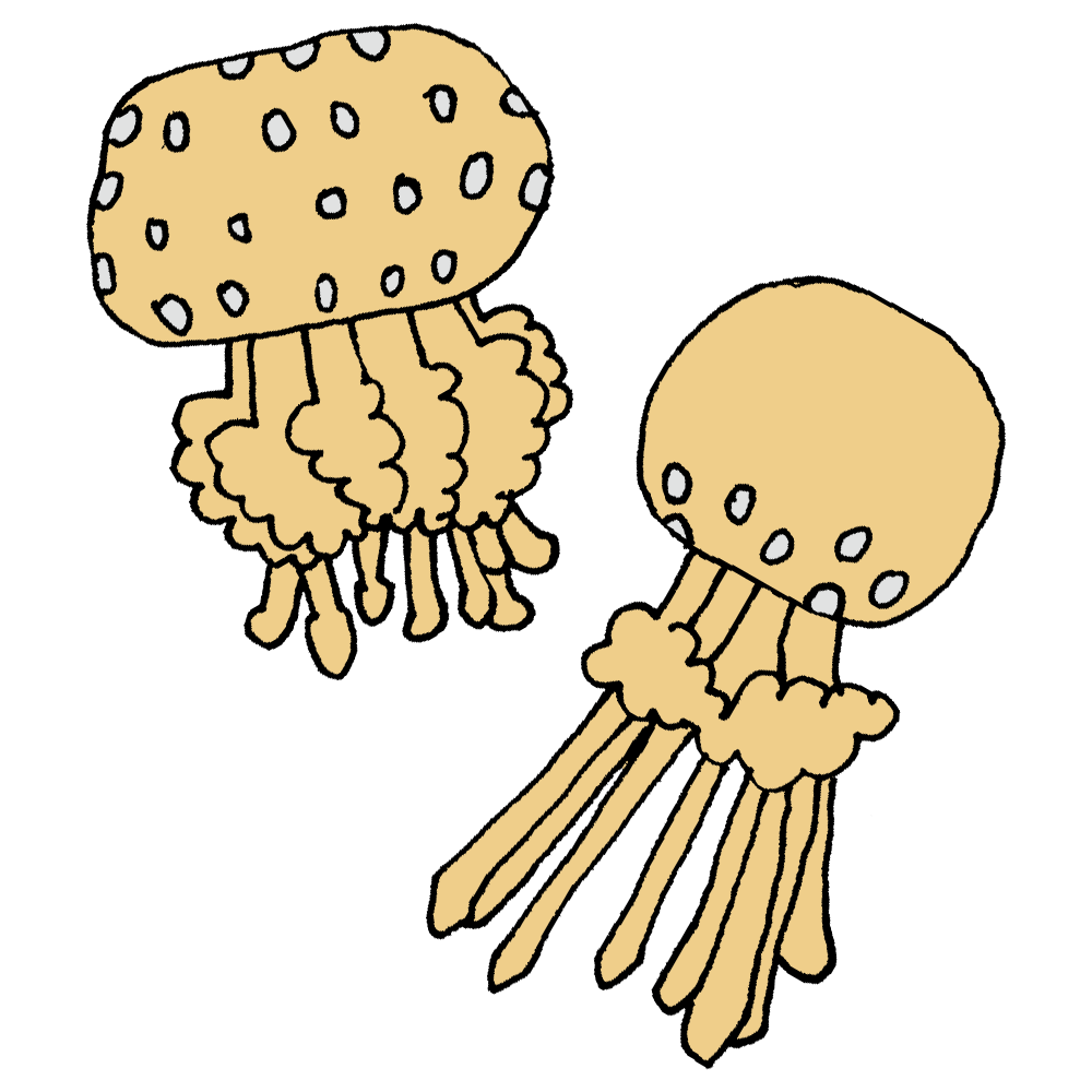 タコクラゲというクラゲのフリーイラスト