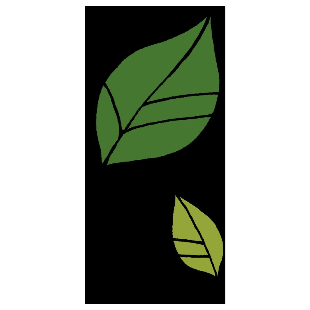 2枚の葉っぱのフリーイラスト