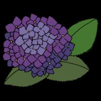 手書き風,花,梅雨,6月,7月,アジサイ,あじさい,紫陽花,植物,咲く,葉,花弁,雨,つゆ