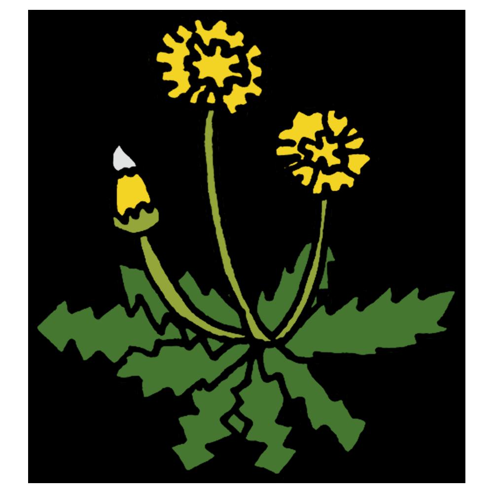 手書き風,植物,タンポポ,花,雑草,春,4月,暖かい,たんぽぽ,蒲公英,黄色,可愛い,葉,黄色