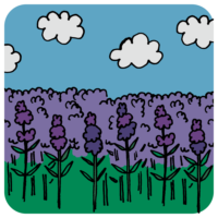 手書き風,ラベンダー畑,ラベンダー,植物,景色,自然,北海道,紫,花,絨毯,初夏,6月,7月,8月
