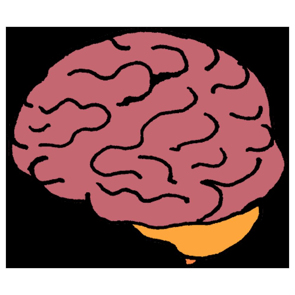 手書き風,人体,人間,頭,医療,体の一部,体,身体,脳みそ,脳,のう,ブレイン,考える,右脳,左脳,頭,大事,急所,脳死,心,病気,医療,医学,人,しわ,皺