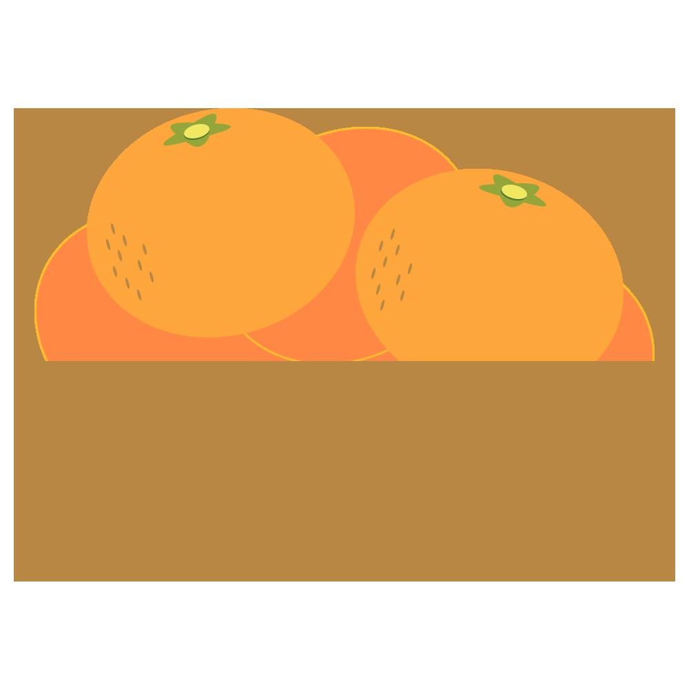 食べ物,食材,みかん,皮,ミカン,蜜柑,冬,果物