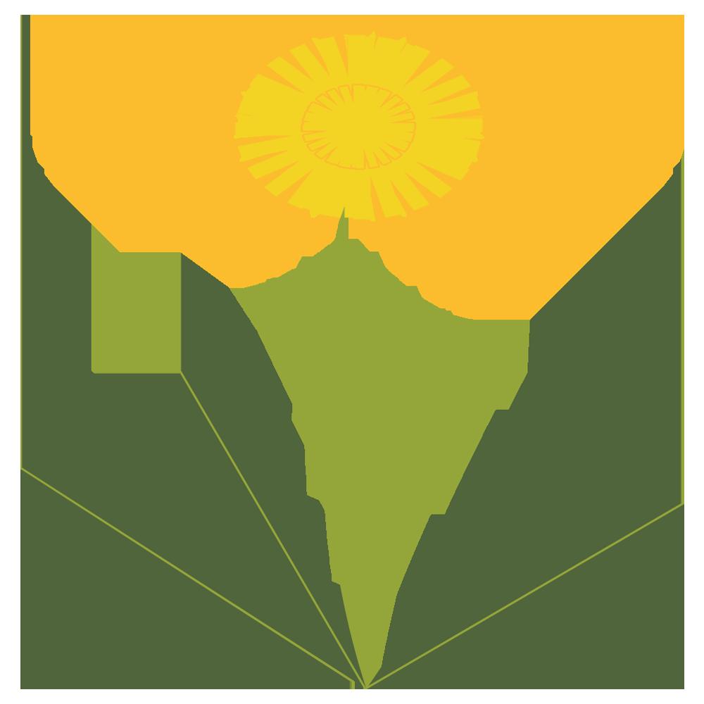 自然,植物,春,タンポポ,たんぽぽ,花