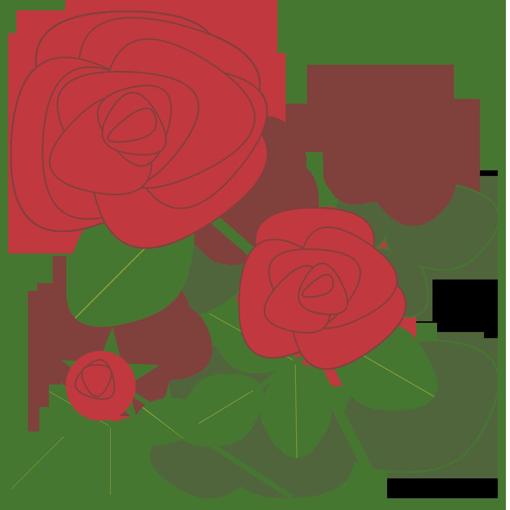 自然,植物,花,バラ,薔薇,ばら