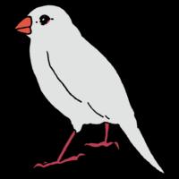 白文鳥のフリーイラスト