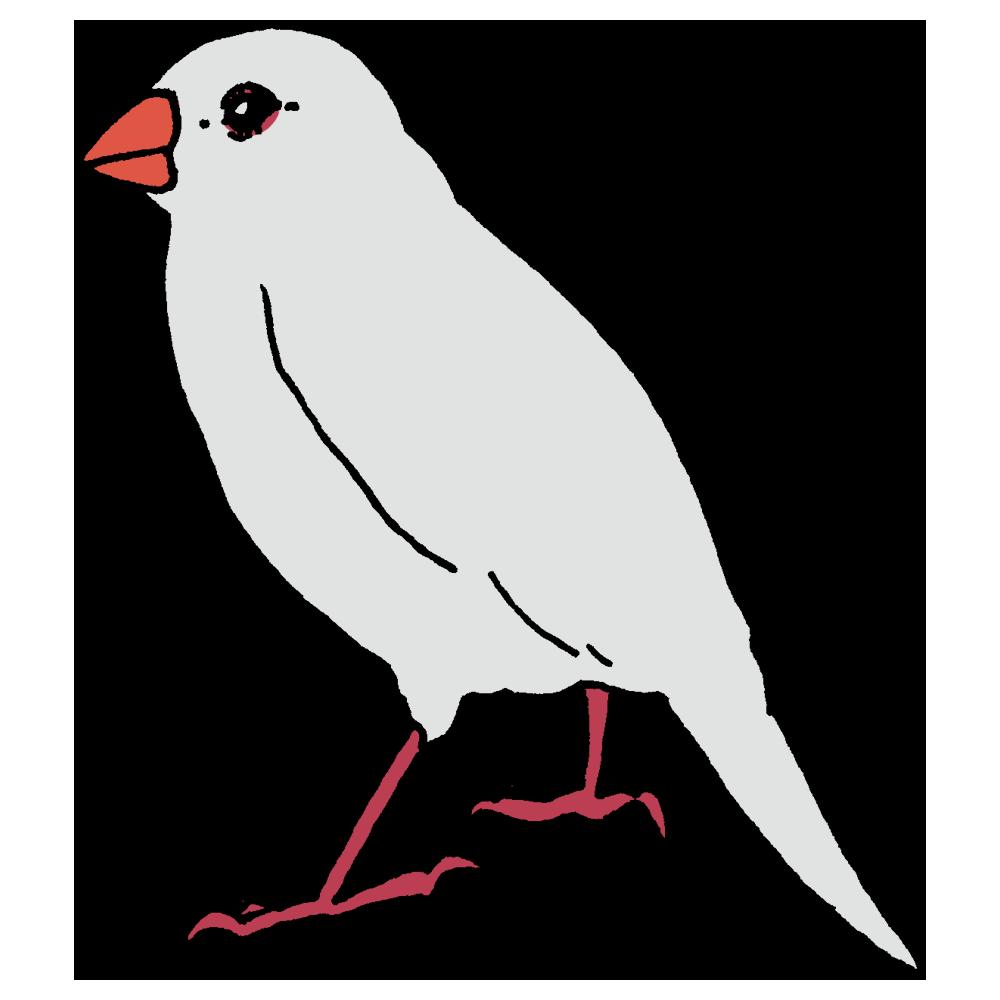 文鳥,白,鳥,動物,ボールペン描き