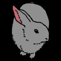正面から見たウサギのフリーイラスト