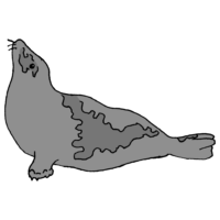 タテゴトアザラシのフリーイラスト