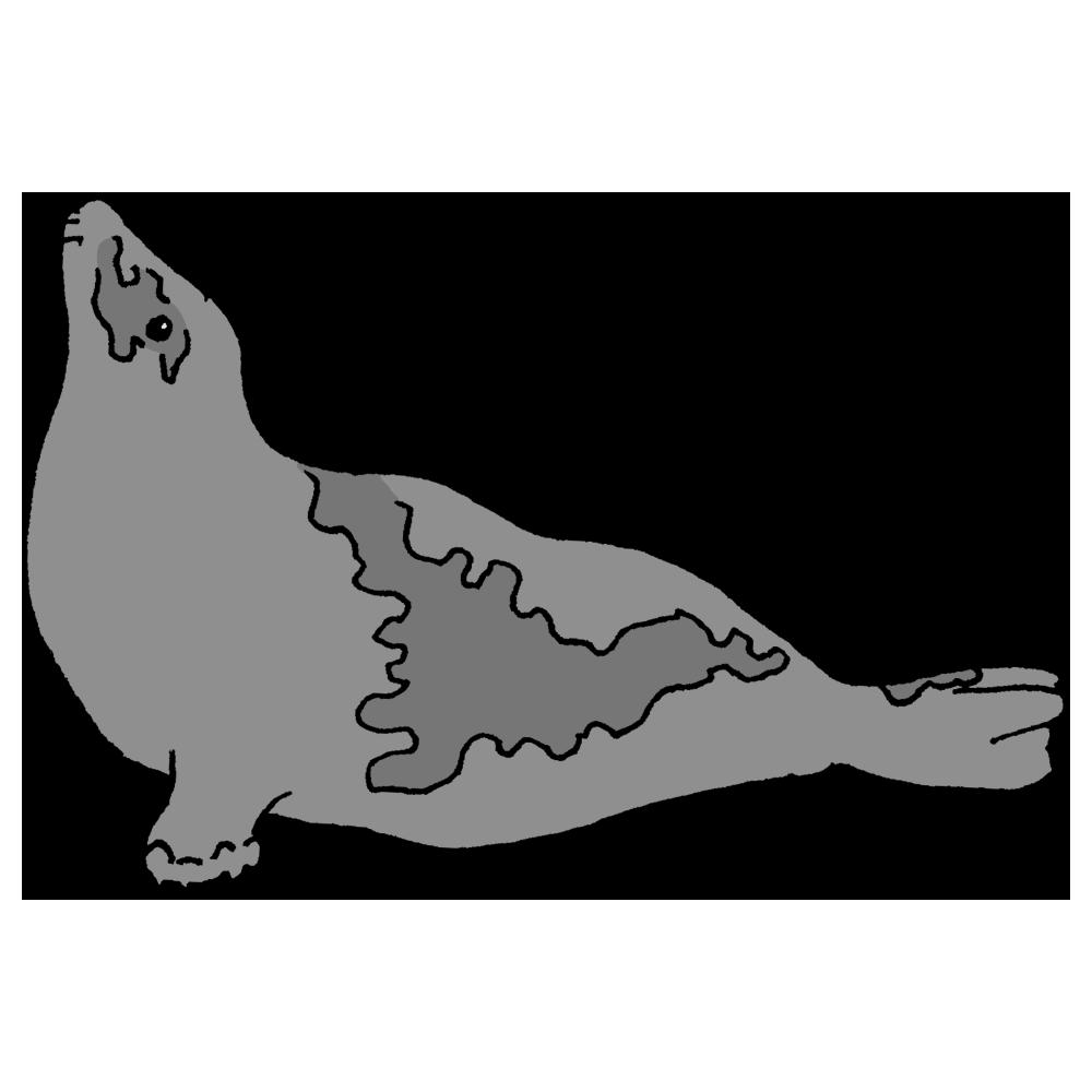 手書き風,タテゴトアザラシ,アザラシ,海,水族館,水,生き物,動物