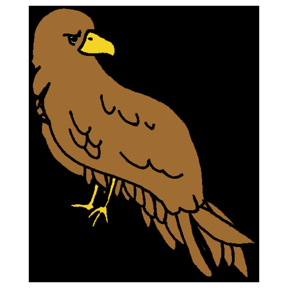 手書き風,動物,鷹,タカ,たか,一富士二鷹三茄子,めでたい,とまる,ホークアイ,お正月,年賀状,お祝い,トリ,鳥類,鳥