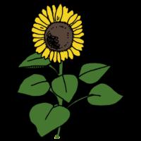 手書き風,植物,夏,7月,8月,ひまわり,ヒマワリ,向日葵,太陽,黄色,真夏,サマー,花,大きい,背が高い