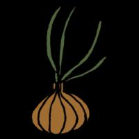 手書き風,食べ物,野菜,玉ねぎ,芽が生える,芽,栄養,とられる,栄養がない,玉葱,たまねぎ,タマネギ,生える,放置,置き去り,食べられない
