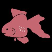 金魚のフリーイラスト